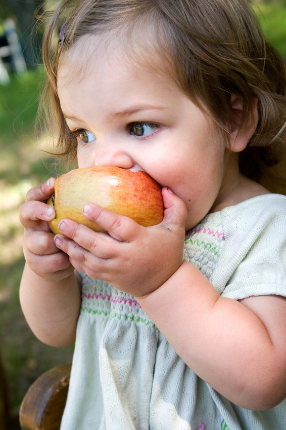 Photo of female toddler eating an apple
